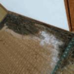 シロアリの畳被害01